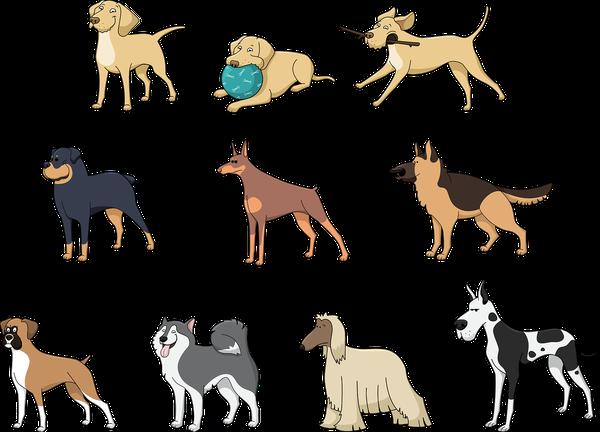 Odpowiednie legowisko dla psa