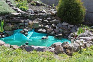 Read more about the article Akcesoria do oczek wodnych