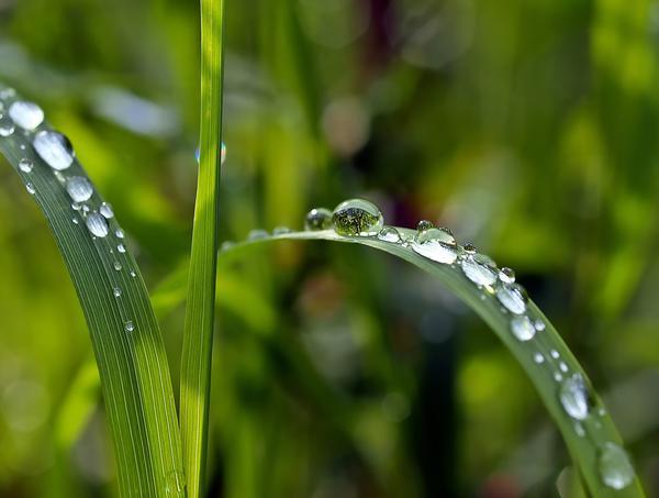 Zagospodaruj mądrze deszczówkę