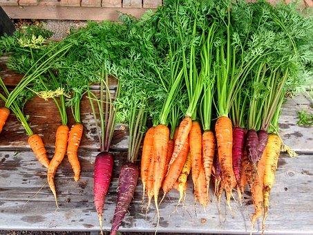 Własna produkcja warzyw i owoców