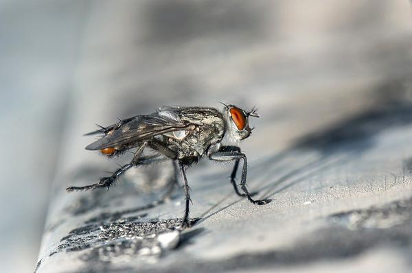Modele lamp na owady
