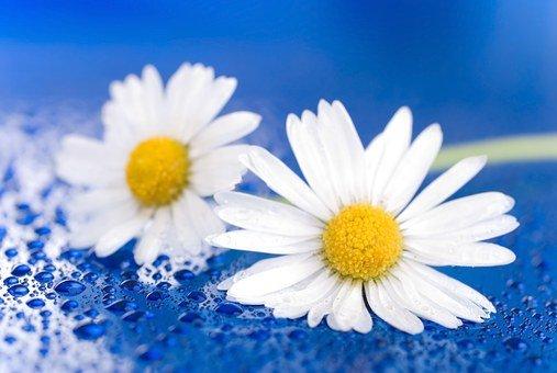 Read more about the article Dbając o ubrania pomyśl o saszetkach kwiatowych